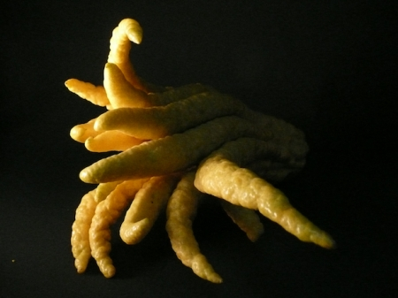 buddhas-hand