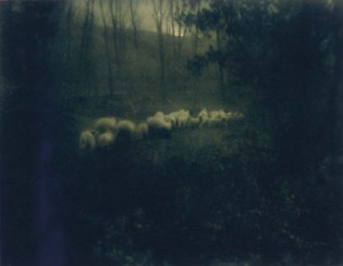 Edward Steichen—Pastoral Moonlight, 1907